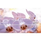 Viola Orchid